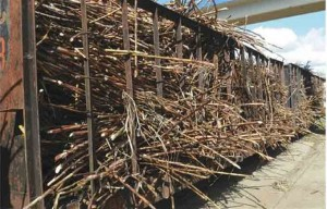 CAEI-projects-to-produce-110,000-tons-of-sugar